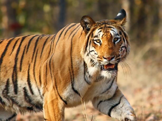 Top 5 Wildlife Sanctuaries in India3